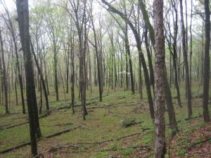 OHT Pic 4387 Open forest